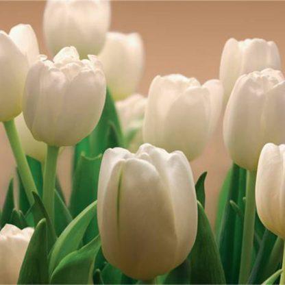 Купить Фотообои Восторг (бумажные) Белые тюльпаны (294х201) 9л в Санкт-Петербурге по недорогой цене и с быстрой доставкой.